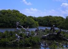Barbuda-Frigate-Bird-Sanctuary